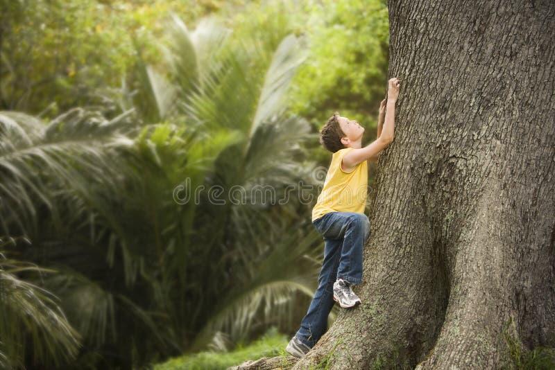 Νέο αγόρι που αναρριχείται στο μεγάλο δέντρο στοκ εικόνες