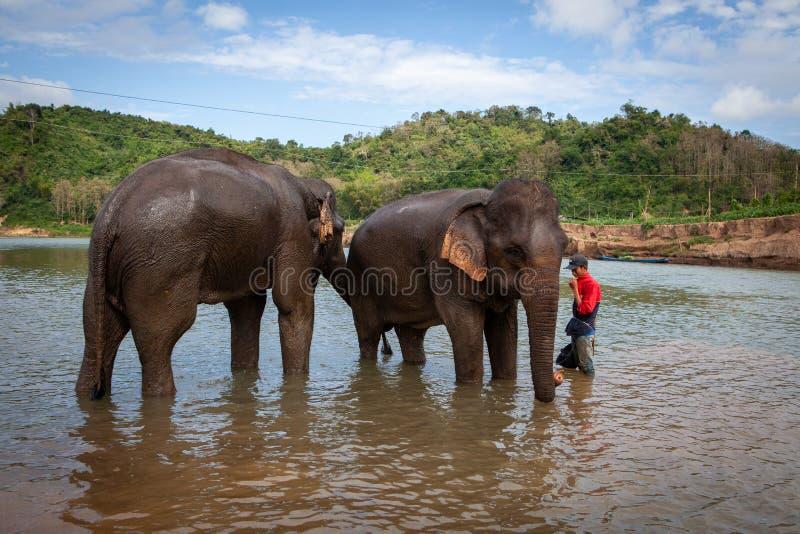 Νέο αγόρι mahout που στέκεται στον ποταμό στόλου με δύο ελέφαντες Luang Prabang, Λάος στοκ φωτογραφία