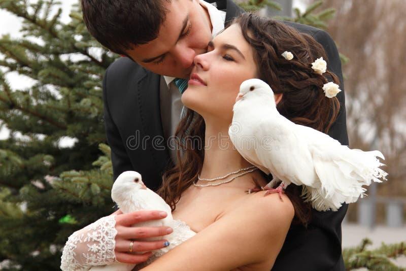 Νέο γαμήλιο ζεύγος με το ζευγάρι περιστεριών, νύφη φιλιών σκουπών άνω του PA στοκ φωτογραφίες με δικαίωμα ελεύθερης χρήσης