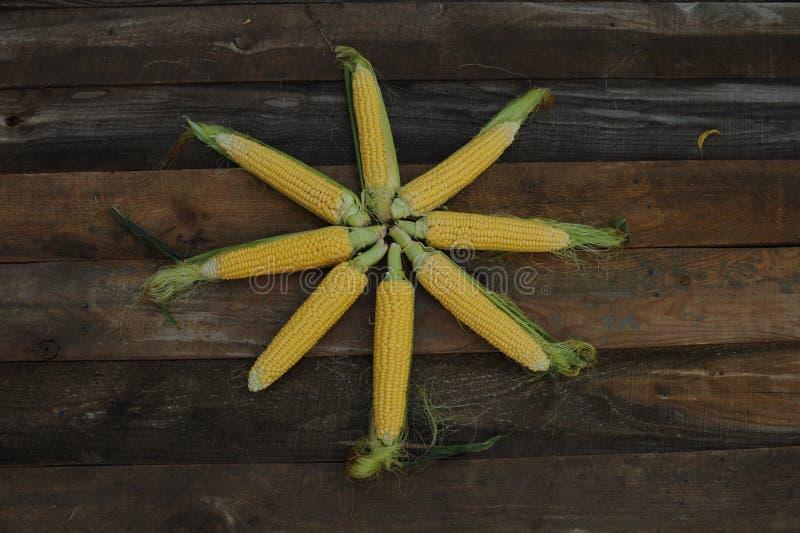 Νέο γαλακτοκομικό ripeness καλαμποκιού, ποικιλίες τροφίμων που αυξάνονται σε ένα οικολογικό αγρόκτημα στοκ εικόνες με δικαίωμα ελεύθερης χρήσης