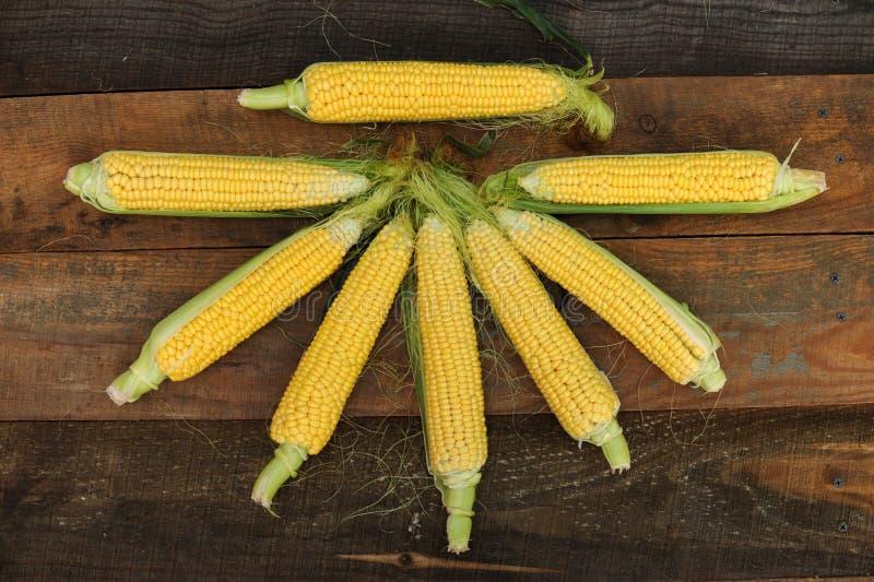 Νέο γαλακτοκομικό ripeness καλαμποκιού, ποικιλίες τροφίμων που αυξάνονται στο οικολογικό αγρόκτημα στοκ φωτογραφία με δικαίωμα ελεύθερης χρήσης