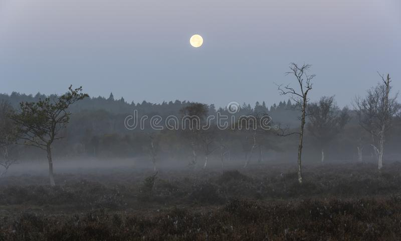Νέο δάσος με τη πανσέληνο στοκ φωτογραφίες