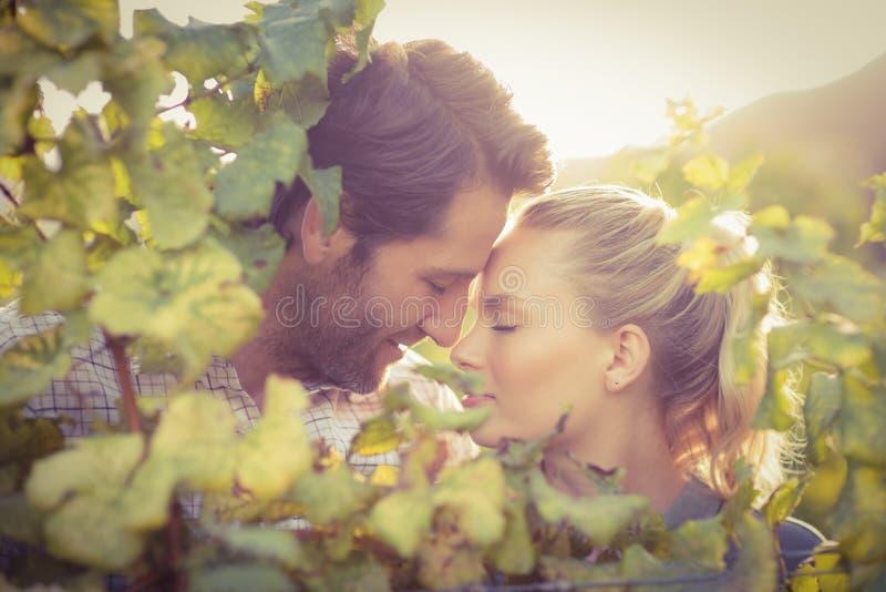 Νέο ευτυχές ζεύγος που έχει μια ρομαντική στιγμή από τις πίσω εγκαταστάσεις σταφυλιών στοκ εικόνα με δικαίωμα ελεύθερης χρήσης