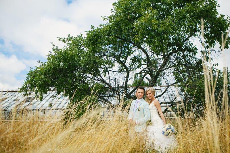 Νέο ζεύγος κοντά στο δέντρο στοκ εικόνες