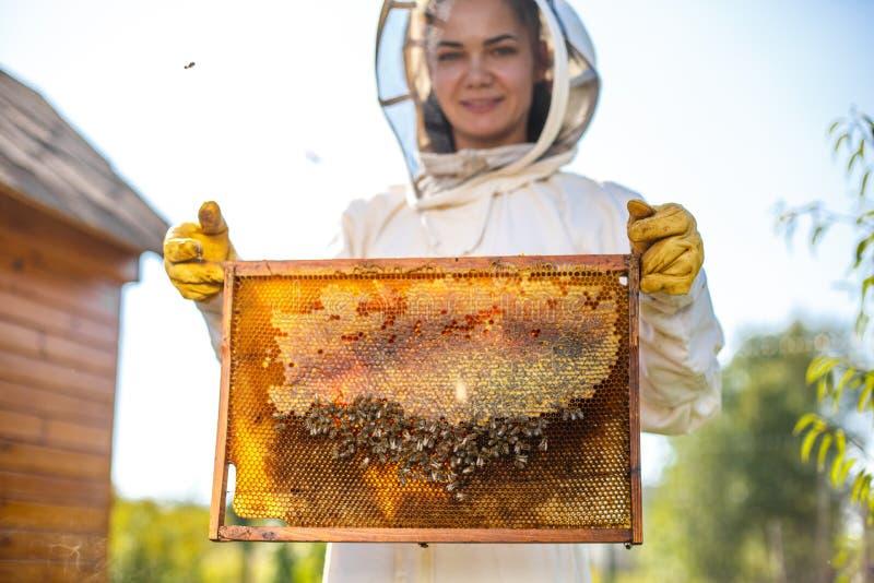 Νέο θηλυκό ξύλινο πλαίσιο λαβής μελισσοκόμων με την κηρήθρα Συλλέξτε το μέλι Έννοια μελισσοκομίας στοκ φωτογραφίες