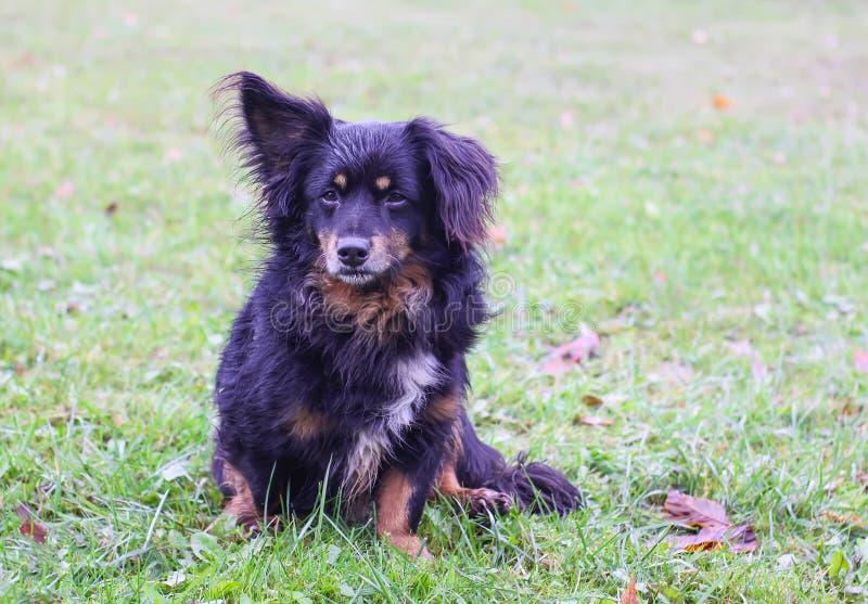 Νέο καθαρής φυλής σκυλί στη χλόη μια ηλιόλουστη ημέρα φθινοπώρου στοκ φωτογραφίες