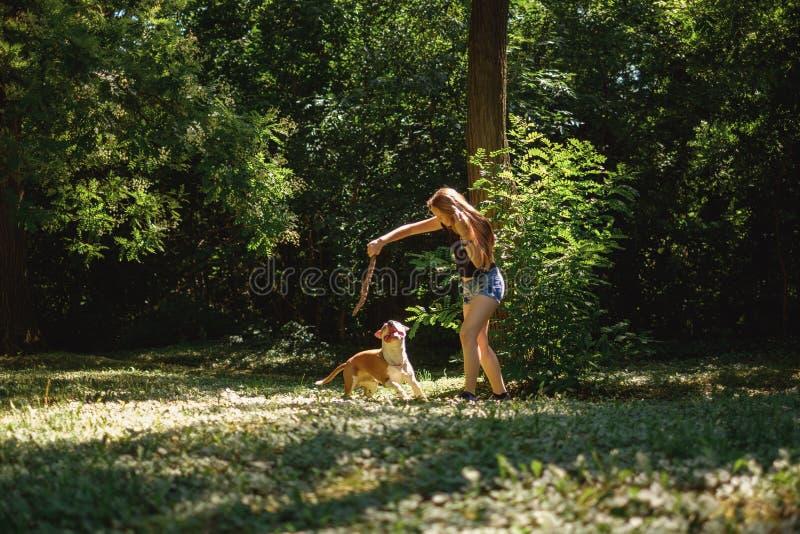 Νέο κορίτσι που έχει τη διασκέδαση με το σκυλί της και έναν κλάδο στοκ φωτογραφία