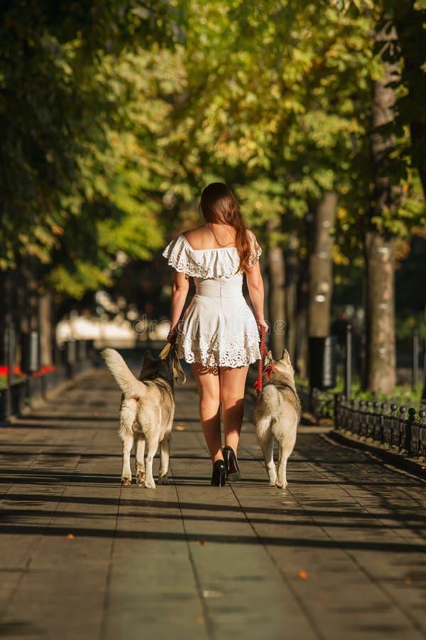Νέο κορίτσι που περπατά κάτω από την οδό με δύο σκυλιά στοκ εικόνα με δικαίωμα ελεύθερης χρήσης