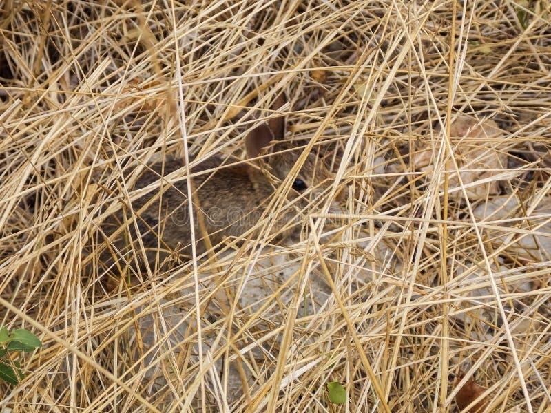 Νέο κρύψιμο εξαρτήσεων κουνελιών στοκ φωτογραφίες
