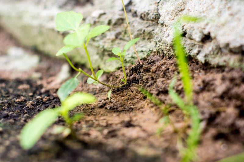 Νέο μικρό δέντρο στοκ φωτογραφία με δικαίωμα ελεύθερης χρήσης