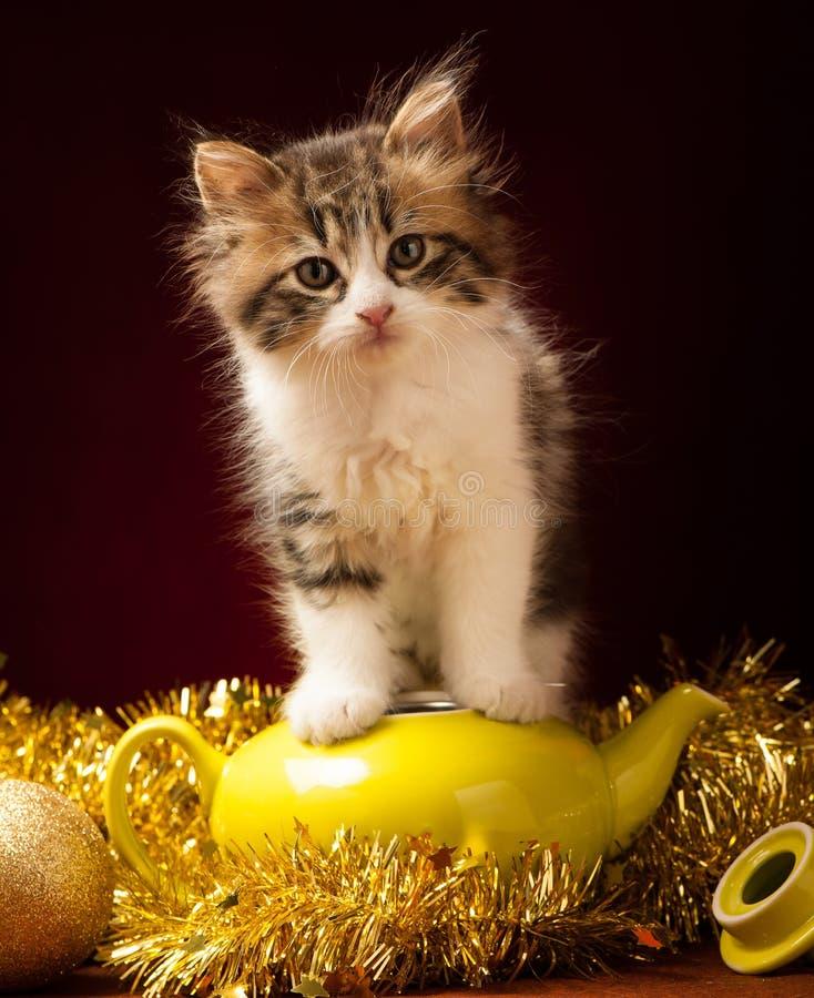 Νέο παιχνίδι γατών με τις διακοσμήσεις Χριστουγέννων στοκ εικόνες
