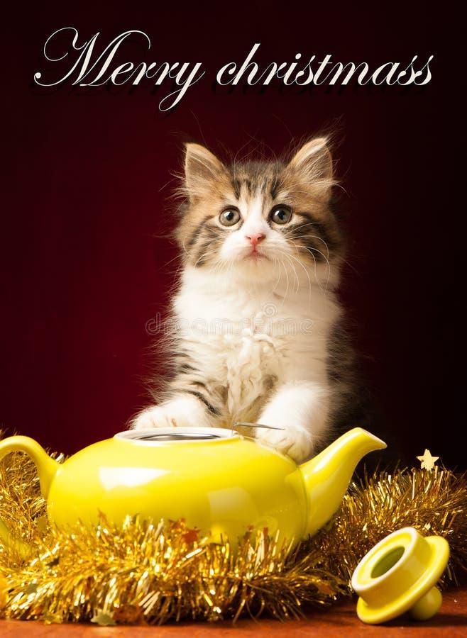 Νέο παιχνίδι γατών με τις διακοσμήσεις Χριστουγέννων στοκ φωτογραφία