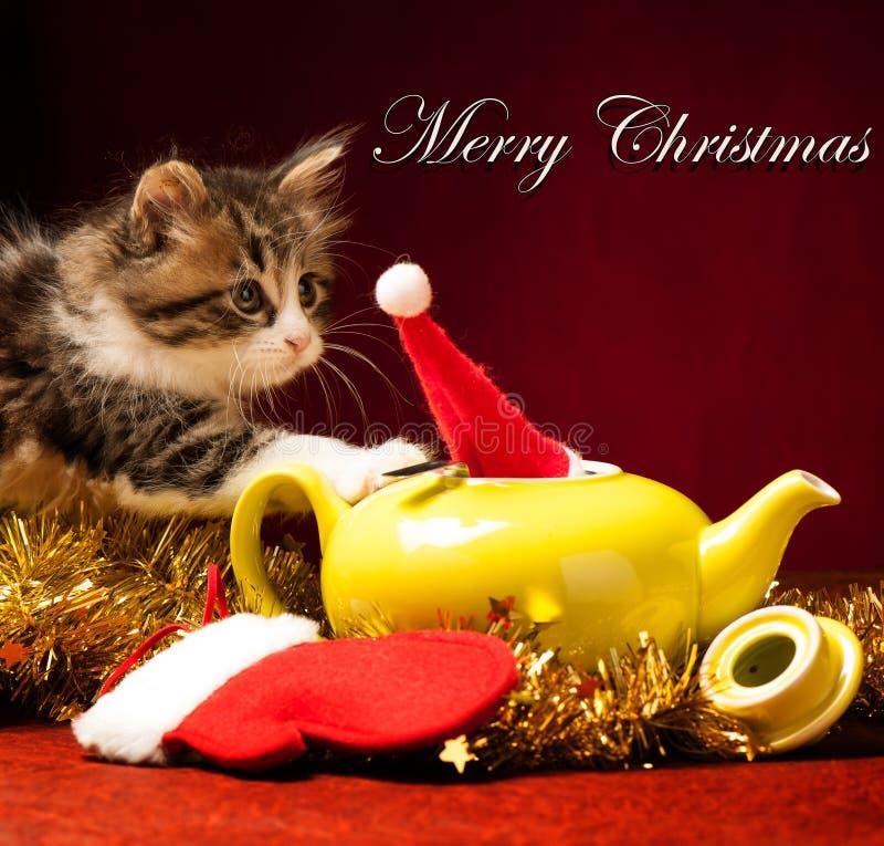 Νέο παιχνίδι γατών με τις διακοσμήσεις Χριστουγέννων στοκ εικόνα