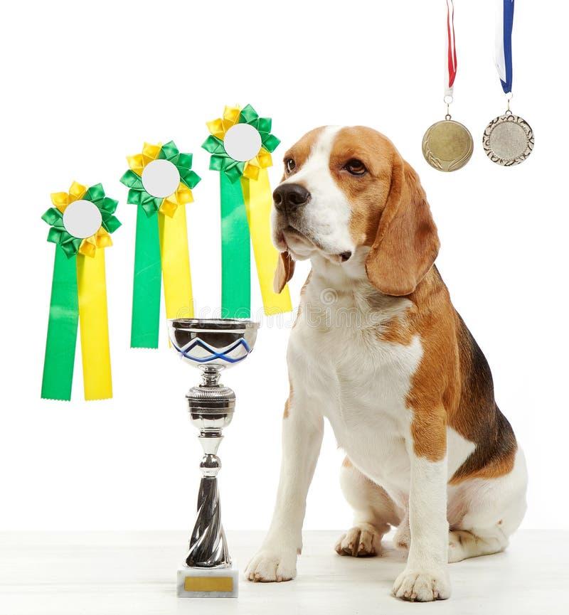 Νέο σκυλί λαγωνικών με τα μετάλλια και το φλυτζάνι πρωτοπόρων στοκ εικόνες