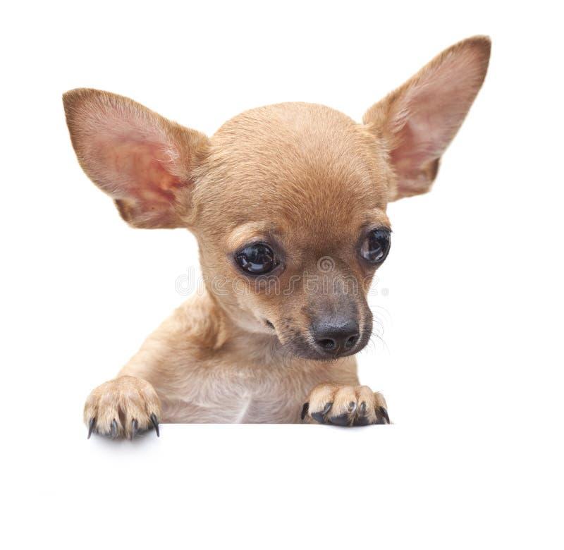 Νέο σκυλί. στοκ φωτογραφίες