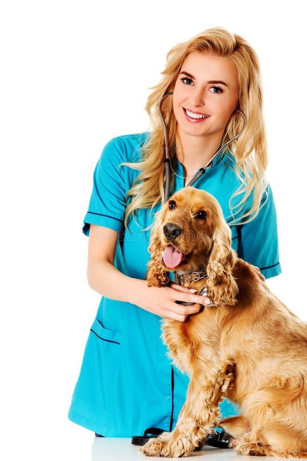 Νέο σκυλί examinng χαμόγελου θηλυκό κτηνιατρικό στοκ φωτογραφία με δικαίωμα ελεύθερης χρήσης