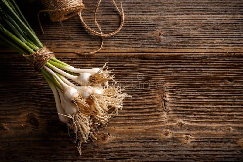 Νέο φρέσκο οργανικό σκόρδο άνοιξη στοκ φωτογραφία