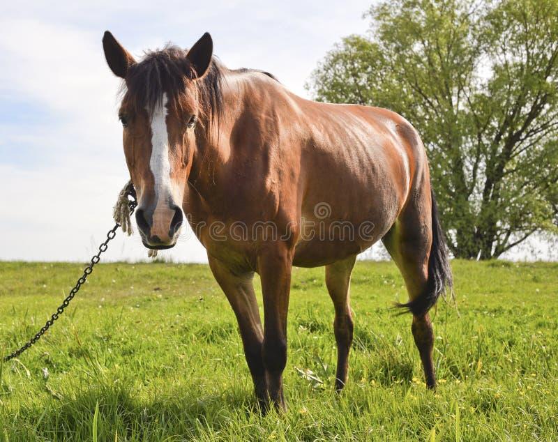Νέο όμορφο και υπερήφανο άλογο στοκ φωτογραφία