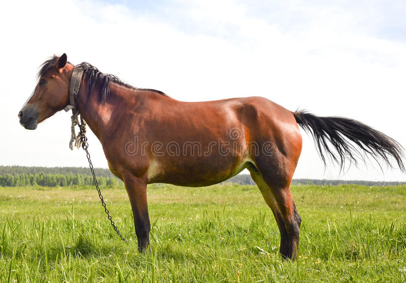 Νέο όμορφο και υπερήφανο άλογο στοκ φωτογραφία με δικαίωμα ελεύθερης χρήσης