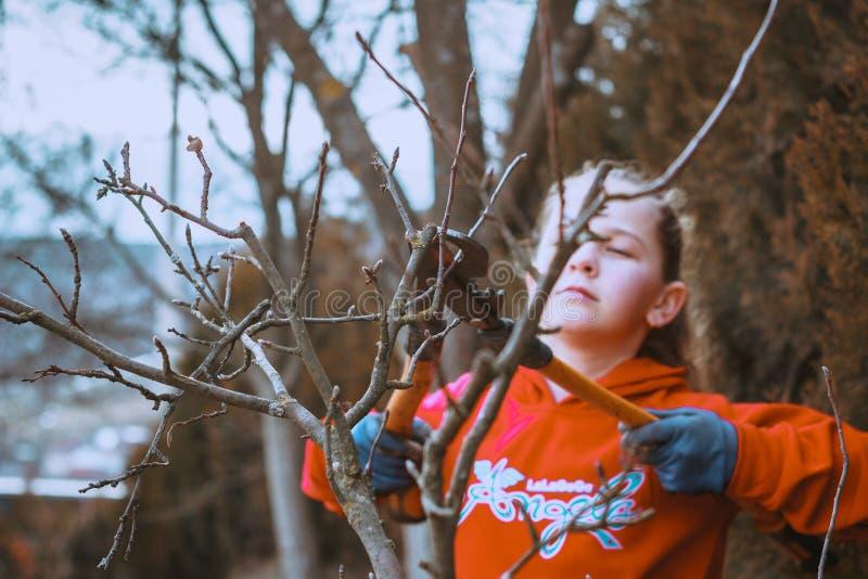 Νέο όμορφο μικρό κορίτσι που φροντίζει τον κήπο Τέμνων κλάδος δέντρων Σπίτι και έννοια κήπων Περικοπή θάμνων Κηπουρική και στοκ φωτογραφίες