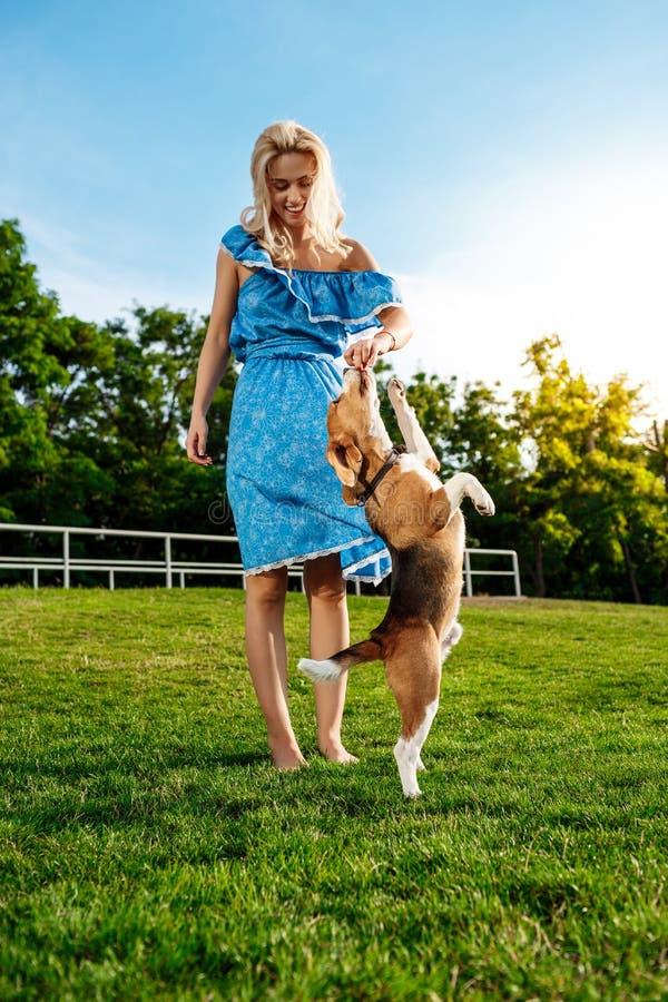 Νέο όμορφο ξανθό περπάτημα κοριτσιών, που παίζει με το σκυλί λαγωνικών στο πάρκο στοκ φωτογραφίες με δικαίωμα ελεύθερης χρήσης