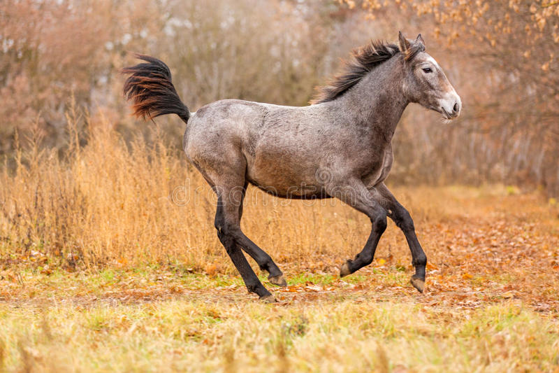 Νέο foal τρέξιμο ελεύθερο στοκ εικόνα