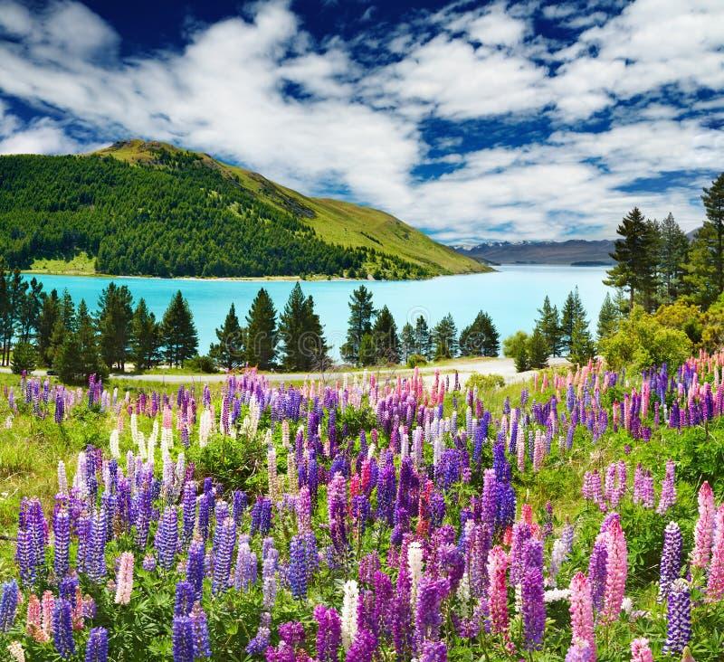 νέο tekapo Ζηλανδία λιμνών στοκ εικόνα