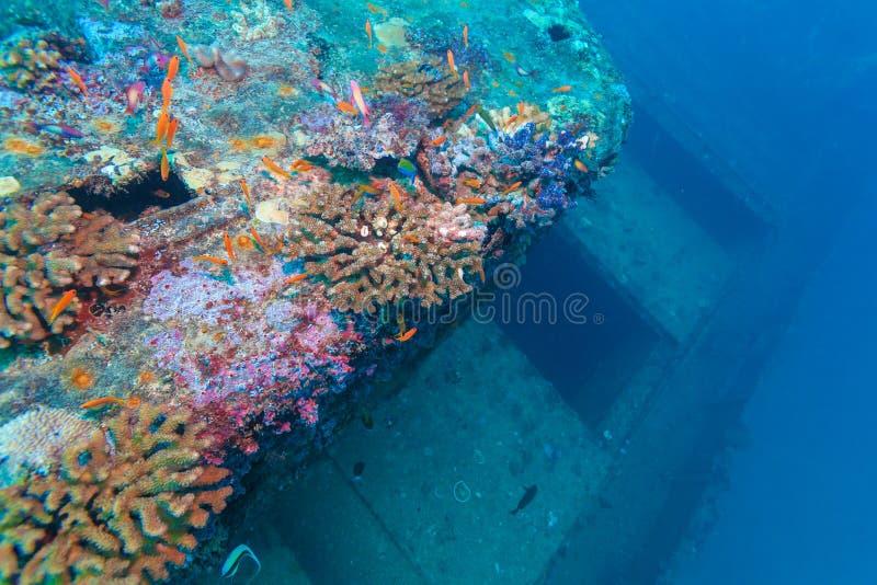 Ναυάγιο στο ωκεάνιο μπλε, Μαλδίβες στοκ φωτογραφίες με δικαίωμα ελεύθερης χρήσης
