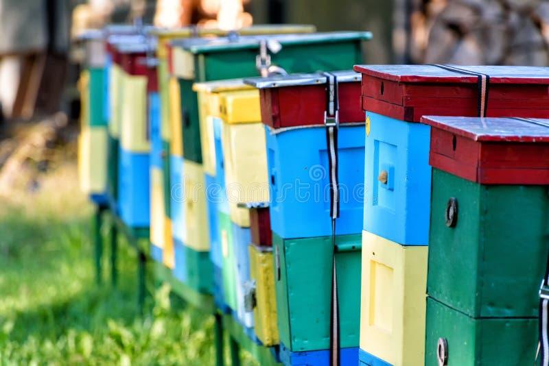 Ναυπηγεία μελισσών στοκ φωτογραφίες