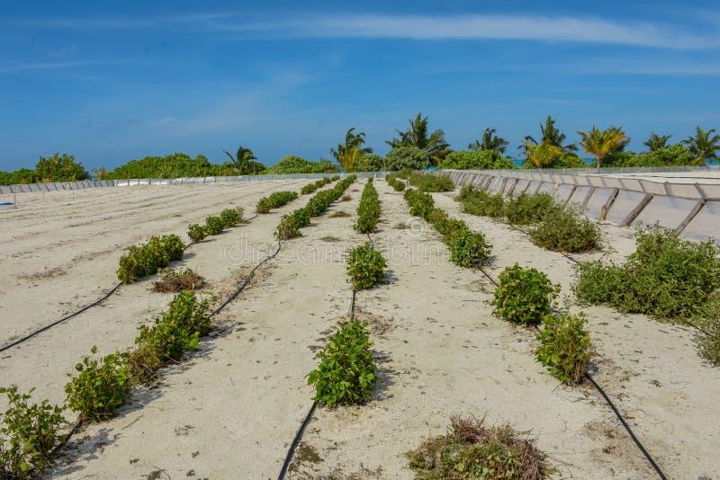 Ναυπηγείο Kaily στην άμμο στο τροπικό νησί στοκ φωτογραφία με δικαίωμα ελεύθερης χρήσης