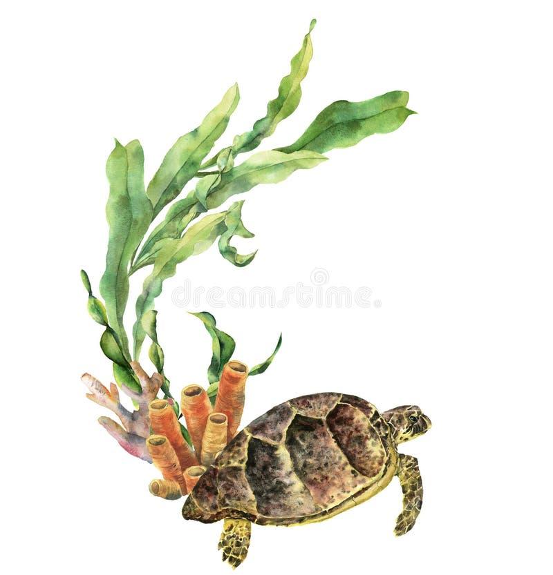 Ναυτικά σύνορα Watercolor με τη χελώνα Το χέρι χρωμάτισε την υποβρύχια απεικόνιση με τον κλάδο laminaria και την κοραλλιογενή ύφα διανυσματική απεικόνιση
