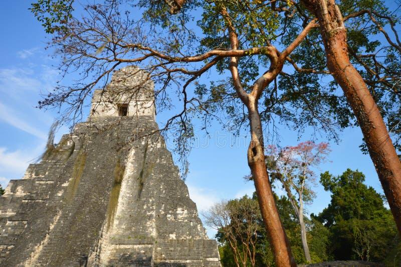 Ναός Ι της αρχαιολογικής περιοχής Tikal στη EL Peten, Γουατεμάλα στοκ εικόνα με δικαίωμα ελεύθερης χρήσης