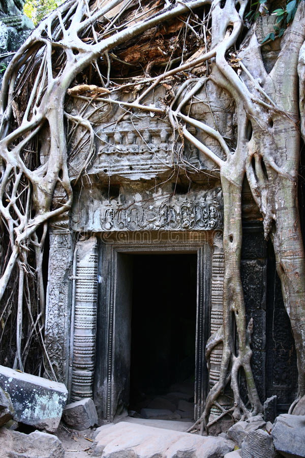 ναός angkor prohm TA στοκ φωτογραφία με δικαίωμα ελεύθερης χρήσης