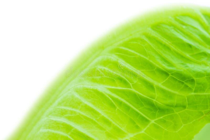 να αναπτύξει πεδίων λάχανων φύλλα στοκ εικόνες με δικαίωμα ελεύθερης χρήσης