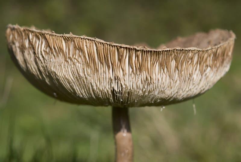 Download να αναπτύξει φθινοπώρου α&ga Στοκ Εικόνα - εικόνα από παραισθησιογόνο, δάσος: 1538597