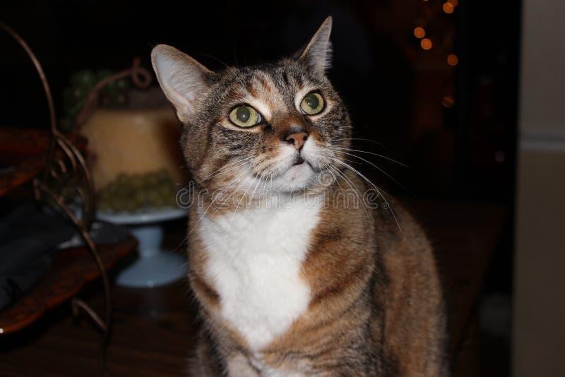 Να αναρωτηθεί γατών στοκ φωτογραφία με δικαίωμα ελεύθερης χρήσης