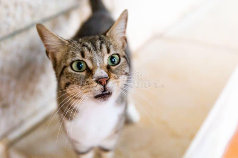 Να αναρωτηθεί τη γάτα στη Ναζαρέτ Ισραήλ στοκ φωτογραφίες με δικαίωμα ελεύθερης χρήσης