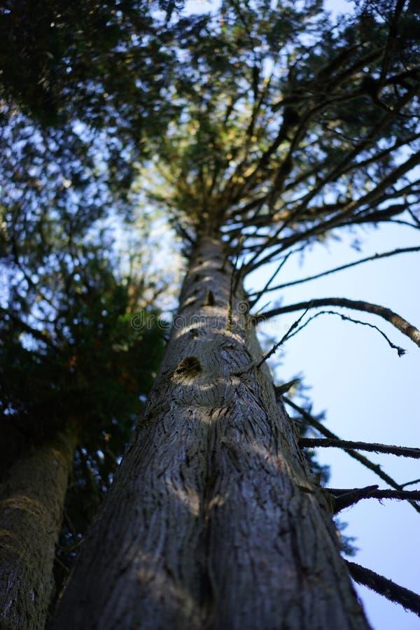 Να ανατρέξει ένας κορμός δέντρων στοκ εικόνες