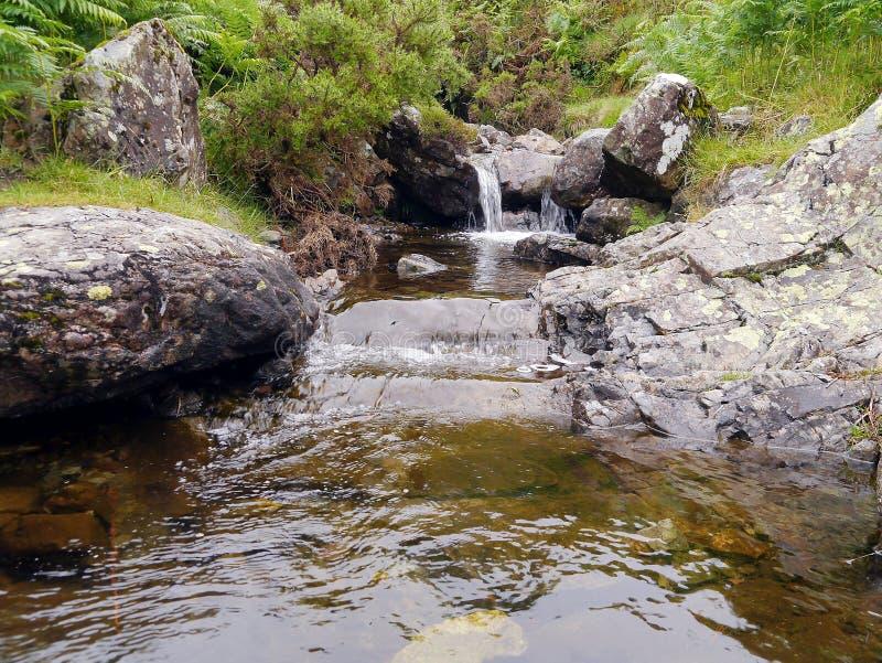 Να ανατρέξει ένα μικρό βράγχιο του δροσερού σαφούς νερού στοκ φωτογραφία με δικαίωμα ελεύθερης χρήσης