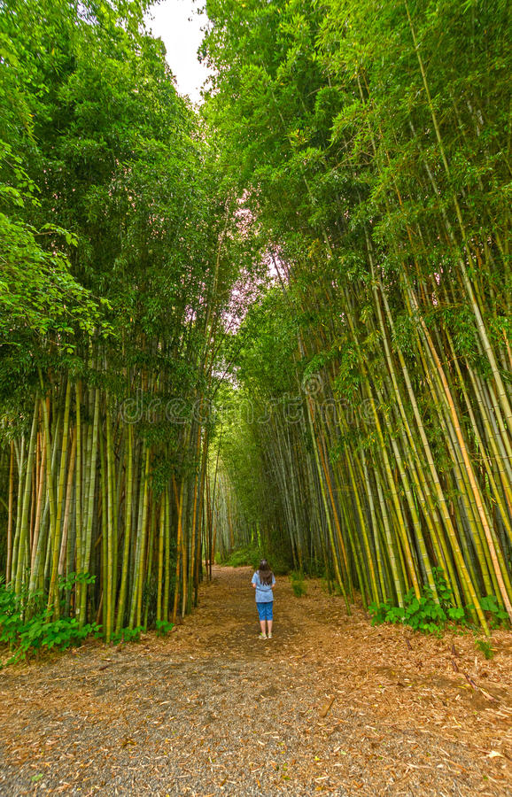 Να ανατρέξει σε ένα δάσος μπαμπού στοκ φωτογραφίες