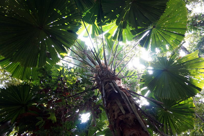 Να ανατρέξει στο τροπικό δάσος στοκ φωτογραφία