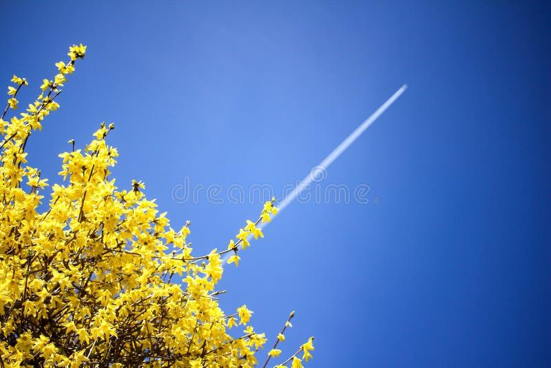 Να ανεβεί ιχνών συμπύκνωσης αεροπλάνων στο μπλε ουρανό Κίτρινο ανθίζοντας υπόβαθρο θάμνων Έννοια ευημερίας στοκ εικόνα με δικαίωμα ελεύθερης χρήσης