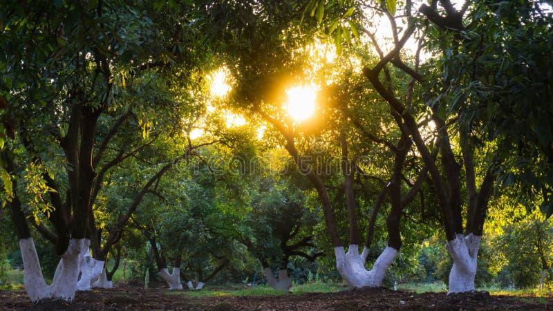 Να γλιστρήσει φωτός του ήλιου μέσω των φύλλων των δέντρων στοκ εικόνες