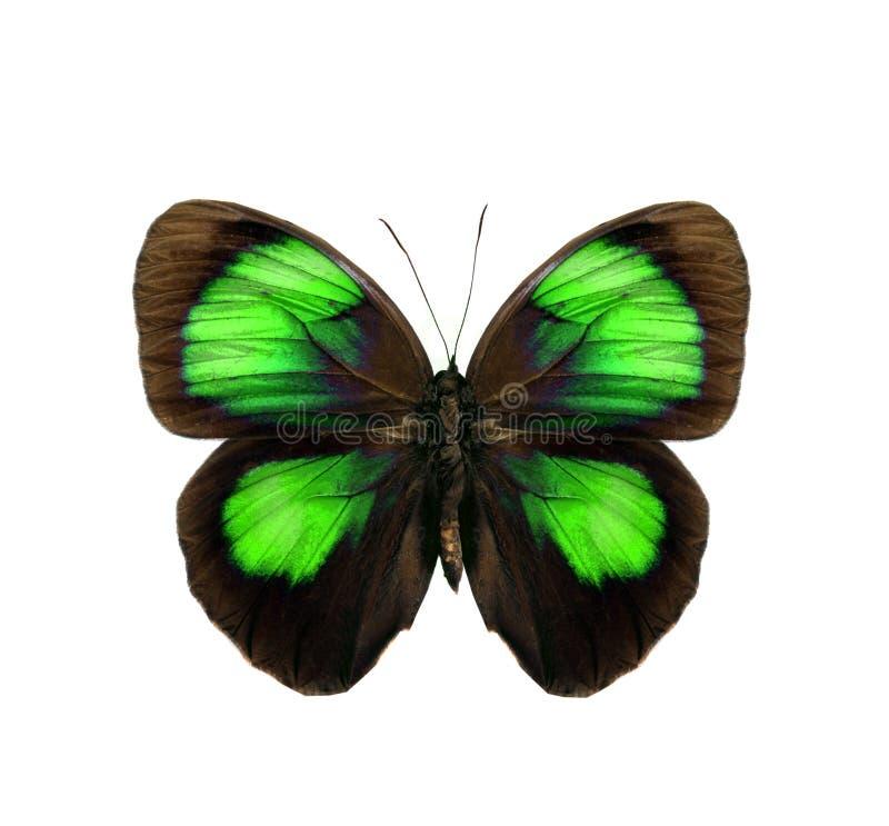 να είστε κενή πεταλούδα βιβλίων που ο ζωηρόχρωμος χρωματισμός θα μπορούσε απομονωμένο λευκό έκδοσης κατσικιών χρησιμοποιημένο σελ στοκ εικόνες
