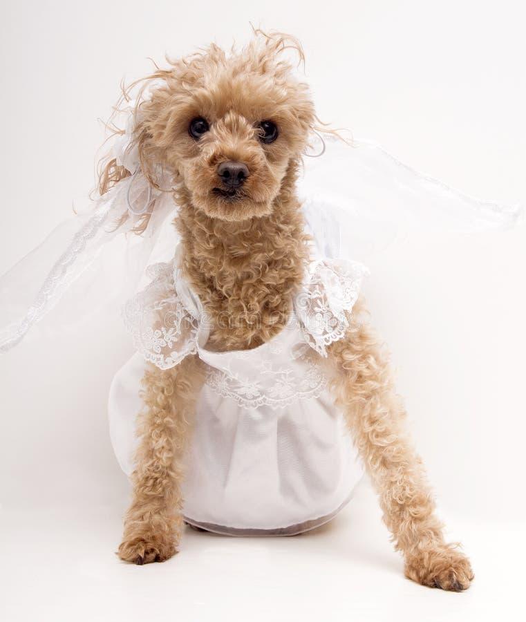 να είστε νύφη στοκ εικόνες