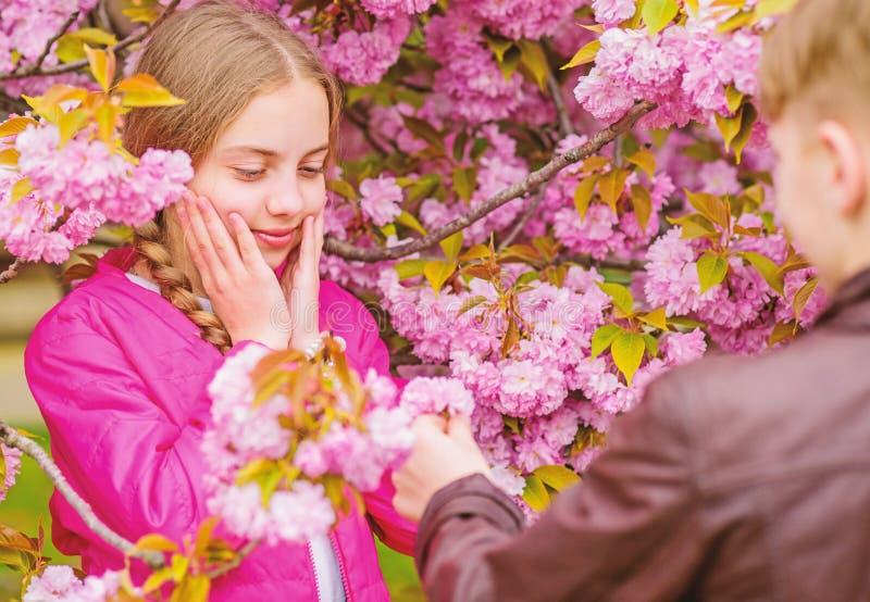 Να εκπλήξει την Ρομαντικά teens Παιδιά που απολαμβάνουν το ρόδινο άνθος κερασιών r Παιδιά ζεύγους στα λουλούδια του δέντρου sakur στοκ εικόνες