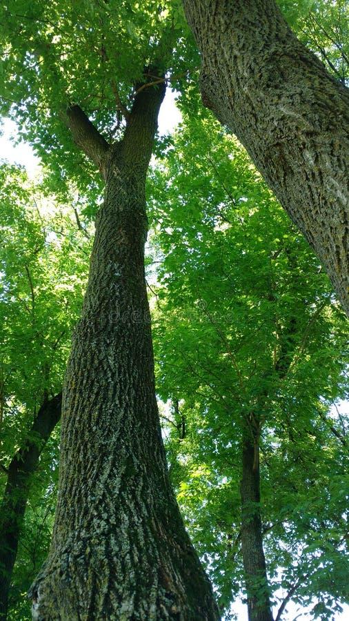 Να εξετάσει επάνω τα δέντρα στοκ εικόνες με δικαίωμα ελεύθερης χρήσης