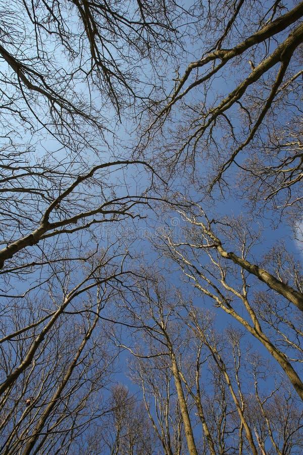 Να εξετάσει επάνω τα δέντρα στο δάσος στοκ φωτογραφία με δικαίωμα ελεύθερης χρήσης