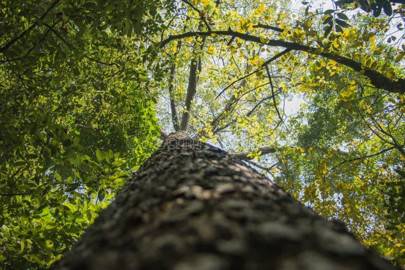 Να εξετάσει επάνω το δέντρο στοκ φωτογραφία με δικαίωμα ελεύθερης χρήσης