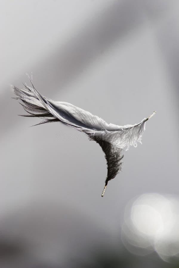 να επιπλεύσει φτερών στοκ εικόνες με δικαίωμα ελεύθερης χρήσης